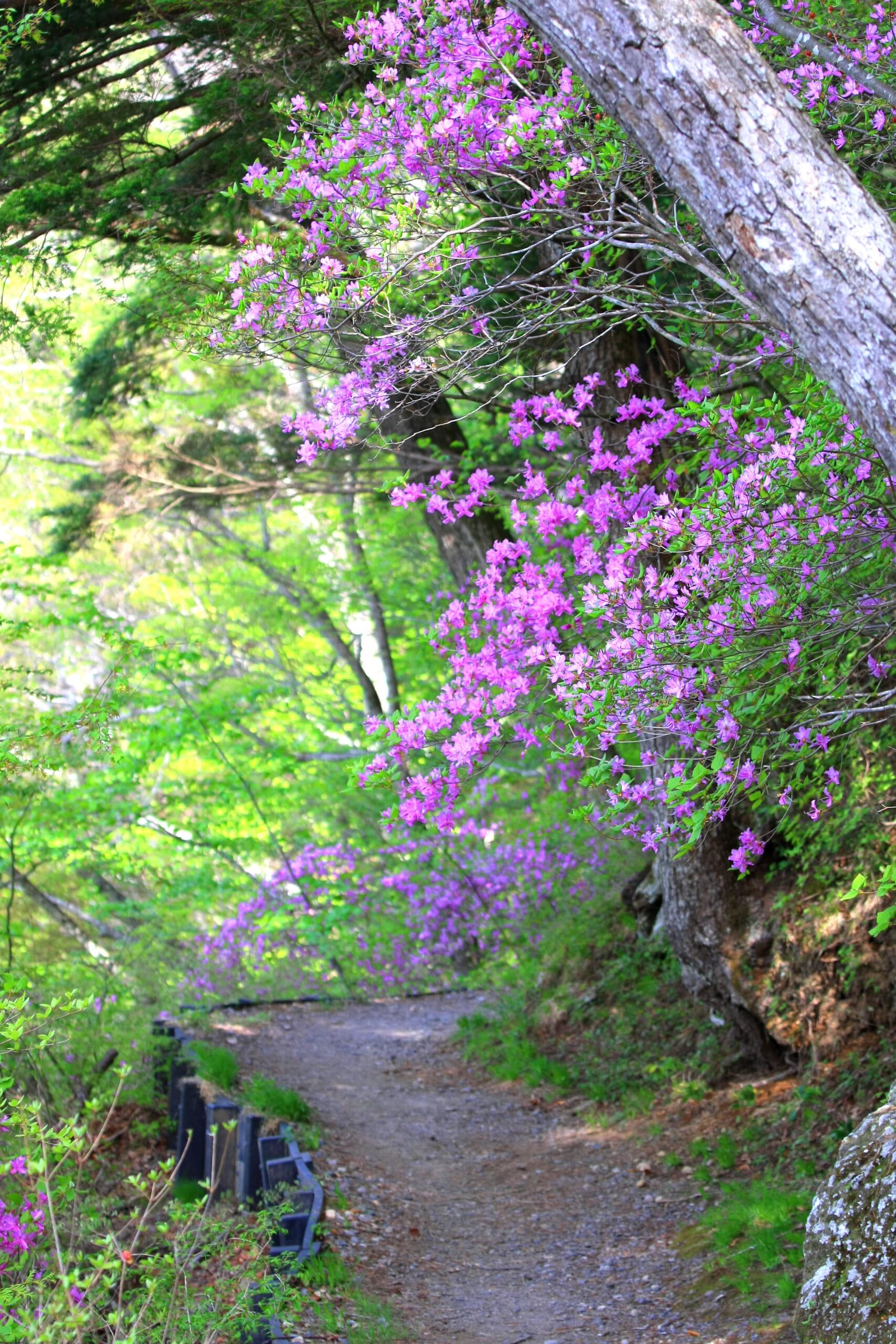 山野草・花